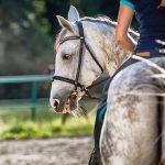 sand schools equestrian Sussex Surrey Hampshire