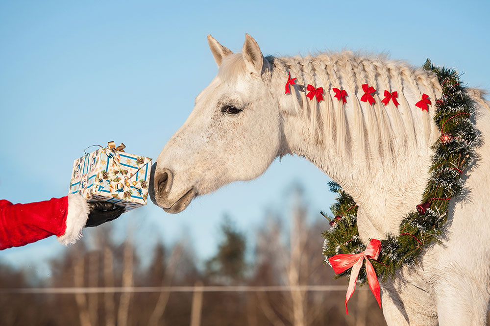 Christmas Gifts Sussex Horses Sand Schools Stable Bases