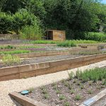Planning a kitchen garden with a groundworks specialist in Petworth West Sussex
